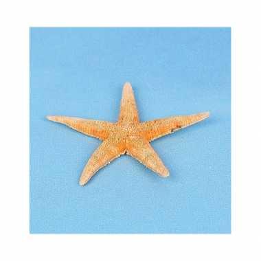 Feestwinkel | 25x stuks strand/zee dieren zeesterren archaster 7 cm m