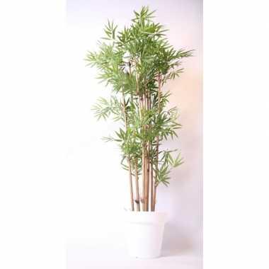 Boom In Pot.Feestwinkel Tropische Bamboe Boom In Witte Pot 190 Cm Morgen Amster